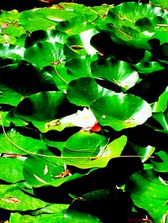 Emerald Emerald Green, Plant Leaves, My Arts, Entertaining, Plants, Plant, Funny, Planets