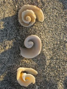 seashells on the sea shore Spirals In Nature, Surf, Underwater Life, I Love The Beach, Sea World, Ocean Life, Marine Life, Starfish, Sea Glass