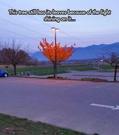 The power of light...