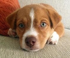 Turtle the Mixed Breed puppy - adorable!