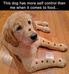 Funny Pictures Of The Day – 36 Pics #DogPictures