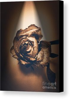 Rose Canvas Print featuring the photograph A Rose Is Born by  Onedayoneimage Photography  rose, spotlight, sepia, petals, lit, illuminated, botanical, artistic, aged, flower, floral, decor, interior design