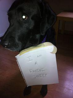Source: dog-shaming.com/