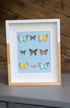 Decorate a little one's room with this Butterfly Art! Looks like it's straight out of the museum. {via @Haeley Giambalvo / Design Improvised} /ES
