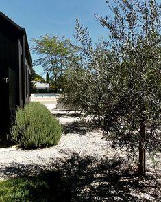 Olives, Garden Landscaping, Landscapes, Gardens, Plants, Outdoor, Instagram, Design, Front Yard Landscaping