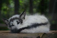 magicalnaturetour: Sleeping Arctic Fox 2 (by Ber'Zophus) Beautiful Creatures, Animals Beautiful, Wolf Hybrid, Funny Animals, Cute Animals, Wild Animals, Fantastic Fox, Pet Fox, Arctic Fox