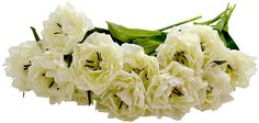 Sia Bloomed Tulips, 12 Stems, Cream, 18-Inches Tall ** Read more reviews of the product by visiting the link on the image.