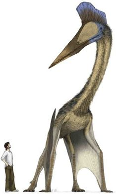 Mark Witton's Hatzegopteryx