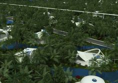 Residential Area of the Venus Project City Design