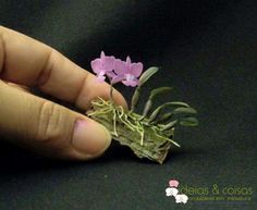 Orchids care provides proper details on how to grow orchids until they become healthy and bloom flowers Unusual Plants, Rare Plants, Cool Plants, Types Of Orchids, Types Of Flowers, Mini Plants, Little Plants, Mini Orquideas, Orchid Terrarium