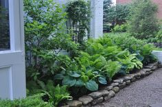Hostas and ferns are best friends in a shady border; you can even plant bulbs among them for spring and fall blooms!