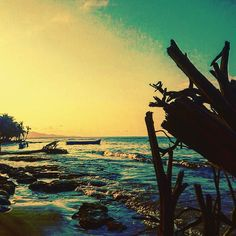 Costa Rica really has been Pura Vida#travel #instatravel #travelstoke #lonelyplanet #travellife #travelgram #instatravelling #instatraveller #peopleoftravel #travelblogger #traveltheworld #solotravel #wanderlust #photo #photography #beautifuldestinations #OutbounderLife #passionpassport  #mytravellibrary #passportready #explore #seetheworld #journey #costarica #centralamerica #caribbean #getbackpacking #travelwonderfull