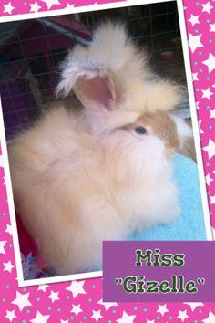 my baby Angora Bunny !