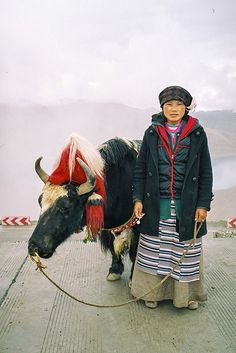 Walking the Yak . Tibet