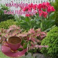 Flowers Gif, Good Night Image, Plants, Google, Greek, Exotic Birds, Plant, Greece, Good Nite Images