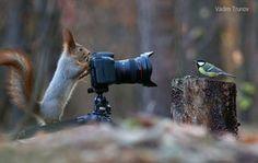 Fotógrafo russo registra uma das mauis belas sessões de fotos com esquilos 05