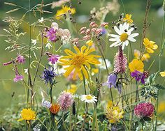 really liking meadow flowers at the moment