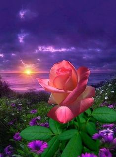 Create your rose garden that compliment and accent the home's style and will contribute to the success of your landscape and your ultimate rose garden design Beautiful Rose Flowers, Flowers Nature, Art Floral, Rose Garden Design, Rose Images, Good Night Image, Rose Wallpaper, Beautiful Sunrise, Nature Scenes