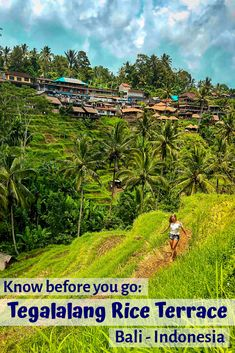 All you need to know before visiting the Tegalalang Rice Fields in Bali - Indonesia ... | Bali Rice Fields | Bali Rice Terraces | Bali Rice Fields Photography | Bali Rice Terraces Instagram | Bali Rice Paddies | Bali Rice Fields Ubud | Bali Rice Terraces Indonesia | Beautiful Bali Rice Terraces | Tegalalang Rice Terrace | Tegalalang Bali | Tegalalang Ubud | Tegalalang Rice Terrace Bali Indonesia | Tegalalang Photoshoot | Tegalalang Rice Terrace Couple | Tegalalang Rice Fields |