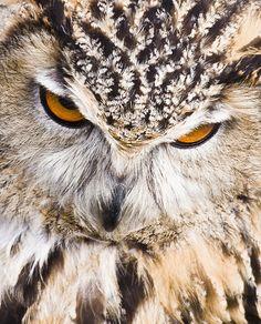 ✯ Eagle Owl