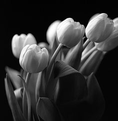 by Ted Forbes, via Flickr Still Life Photography, Art Photography, Photography Composition, Monochrome Photography, Cool Photos, Interesting Photos, Ted, Black And White, Tulips