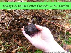 4 Tips to ReUse Coffee Grounds in the Garden @MelissaKNorris