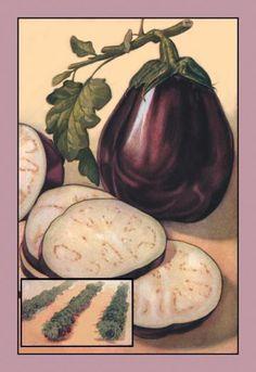 Eggplant 28x42 Giclee on Canvas