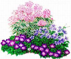 клумба с лилиями фото - Поиск в Google