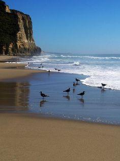 Photo of Pomponio State Beach