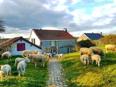 Un jardin dans mon village... A garden in my village... #countryside #campagne #photography #mouton #sheep