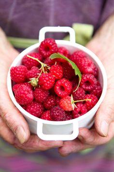 Raspberries pack an anti oxidant wallop