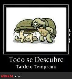 Too funny! Tortoise Pictures, Turtle Love, Teen Posts, Lol So True, Spanish Quotes, Just For Laughs, Funny Animals, Disney Characters, Fictional Characters