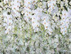 Wedding Photo Background White Backdrops For Phot… Studio Backdrops, Vinyl Backdrops, Floral Backdrop, White Backdrop, Wedding Photo Background, Picture Backdrops, Christmas Backdrops, Holiday Photography, Themes Photo