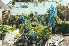 Vegetable garden. lisa aw_krickelin
