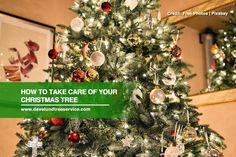 Your Christmas tree needs plenty of TLC if you want it to last throughout the holiday season. Here are a few tips to keep in mind.