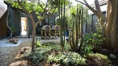 This charming courtyard of an Atwater home in Southern California features California native plants and other drought-tolerant plants such as cacti, succulents and agaves. Water Wise Landscaping, Front Yard Landscaping, Landscaping Ideas, California Native Garden, Southern California, Drought Tolerant Landscape, Garden Landscape Design, Dream Garden, Backyard