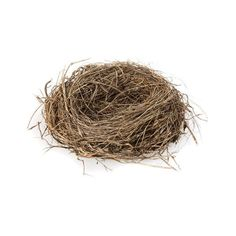 Bird's Nest ❤ liked on Polyvore featuring nests, birds, nature, easter and spring