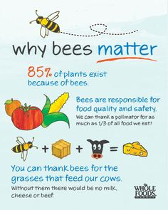 "Share the Buzz! Help ""bee"" the solution to declining honey bee populations. www.wholefoodsmarket.com/sharethebuzz"
