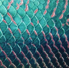 heycalacademy:  Arapaima-scales landscape (closeup of one of the world's largest freshwater fish), snapped by @damianking.