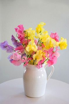 oh my god, yellow sweet-pea-flower Sweet Pea Flowers, Little Flowers, My Flower, Pretty Flowers, Flower Vases, Colorful Flowers, Spring Flowers, Flower Bouquets, Deco Floral