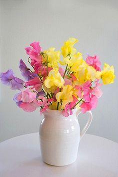 Sweet pea flowers.