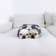 """Explore our web site for more info on """"bulldog puppies"""". It is an exceptional area to find out more. Cute Baby Animals, Animals And Pets, Funny Animals, Funny Cats, Cute Puppies, Cute Dogs, Dogs And Puppies, Doggies, French Bulldog Puppies"""