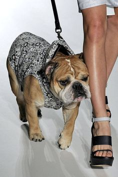 a77b0caa5c 14 Ways to Fashionably Show Your Dog Some Love