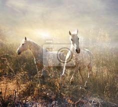 Fotobehang witte paard galopperen op weide