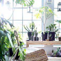 No post: 2 ideias para criar pequenos espaços que recarregam as energias. Link na bio.  #casacomdecoracao #casacomdecoração #casacomdecoracao10anos #regianeivanski