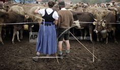 Bavarian herdsmen rest after the return of the cattle from the summer pastures in the mountains in Bad Hindelang, southern Germany, Thursday, Sept. 11, 2014. At the end of the summer season, farmers move their herds down from the Alps to the valley into winter pastures. (AP Photo/Matthias Schrader)