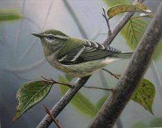 bird-painting-113.jpg (500×398)