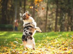 Keep puppies and dogs from eating acorns or drinking water with oak leaves in it.