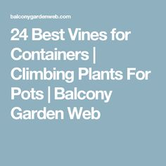 Add a vertical touch in your container garden by growing climbing plants for containers. Must see these 24 best vines for pots. Container Flowers, Container Plants, Container Gardening, Gardening Tips, Indoor Gardening, Climbing Flowering Vines, Climbing Vines, Growing Carrots, Growing Lettuce