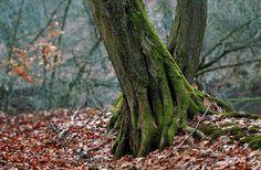 L'ancrage : la méditation de l'arbre